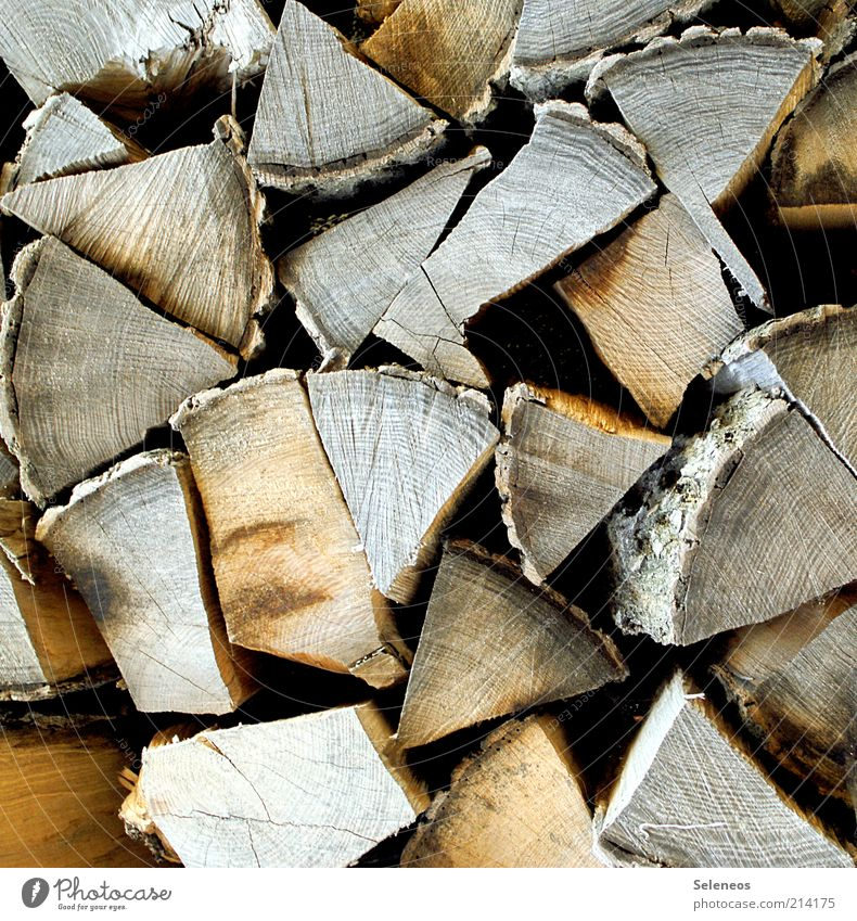 Nature Tree Wood Environment Lie Leisure and hobbies Part Mince Firewood Home improvement