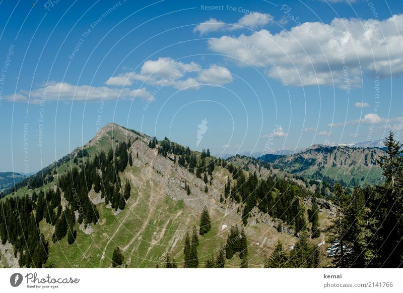 Peaks and trees Harmonious Contentment Senses Relaxation Calm Leisure and hobbies Vacation & Travel Trip Adventure Far-off places Freedom Summer Mountain Hiking