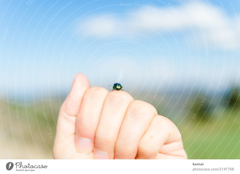 encounter Hand Fingers Environment Nature Animal Sky Clouds Summer Beautiful weather Wild animal Beetle Insect 1 Relaxation To hold on Sit Authentic