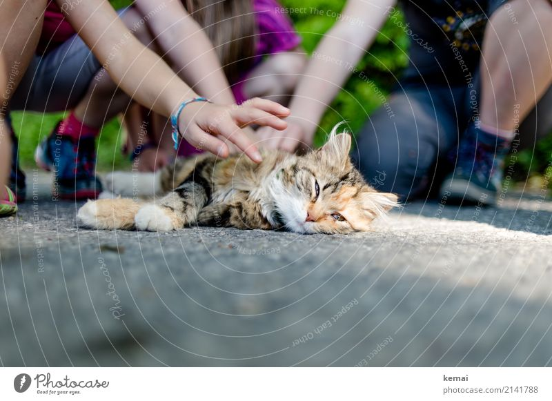 Cat Child Beautiful Relaxation Animal Calm Warmth Life Playing Friendship Leisure and hobbies Contentment Lie Authentic To enjoy Adventure