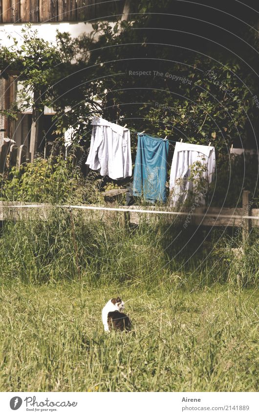cat wash Living or residing Garden Household Clothesline Meadow Deserted House (Residential Structure) Detached house Facade Fence Cat 1 Animal Laundry