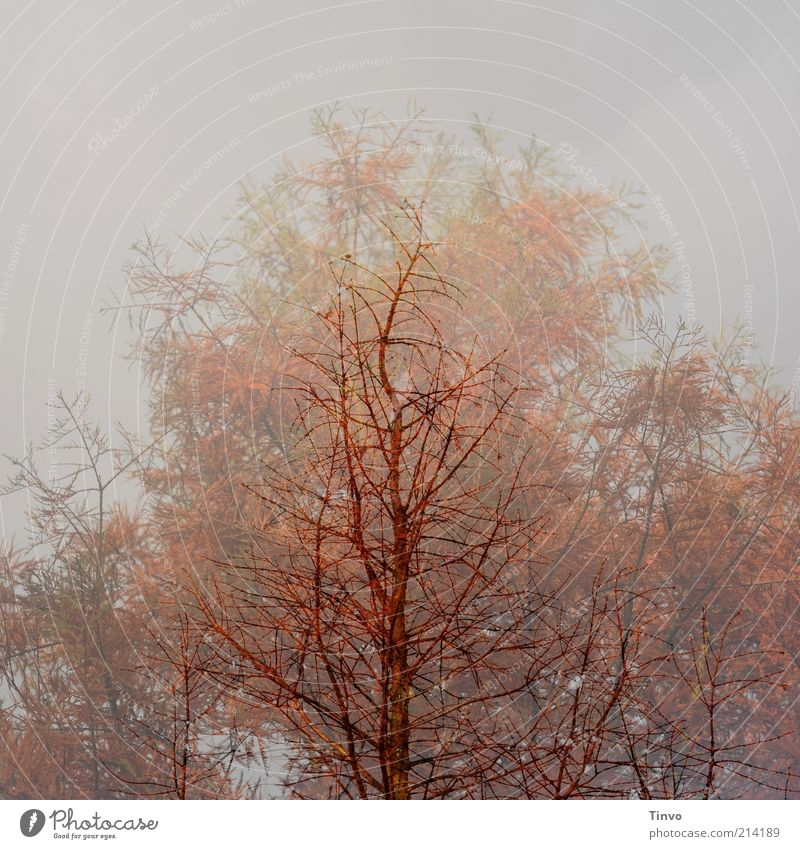 Nature Tree Plant Red Winter Autumn Brown Change Seasons Double exposure Bleak Twigs and branches Ghostly