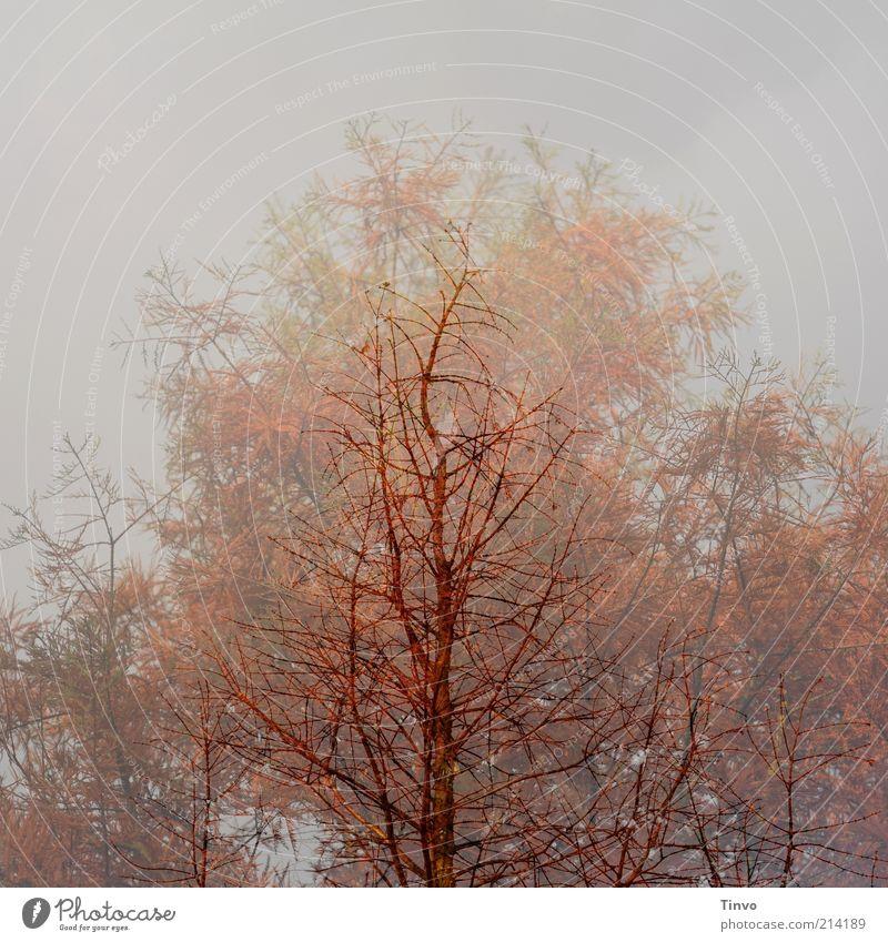 zeitgeist Nature Autumn Winter Plant Change Twigs and branches Bleak russet Double exposure Ghostly Seasons Colour photo Subdued colour Exterior shot
