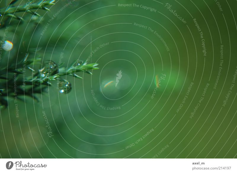 Nature Green Plant Summer Calm Background picture Environment Wet Drops of water Bushes Natural Damp Dew Partially visible Section of image Water
