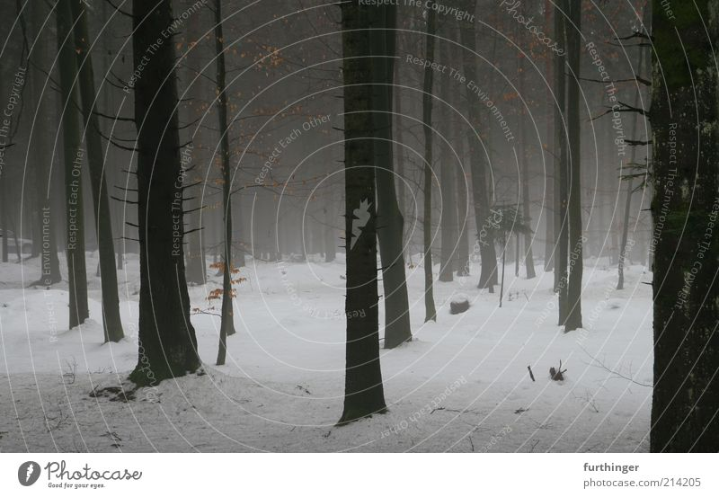 winter forest Environment Nature Landscape Plant Elements Winter Weather Bad weather Fog Ice Frost Snow Tree Forest Wood Black White Moody Apocalyptic sentiment