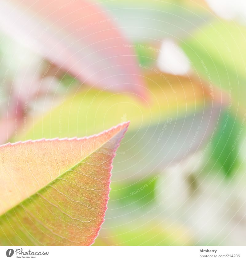 Nature Green Plant Summer Leaf Style Spring Pink Design Environment Growth Soft Decoration Delicate Fragrance Harmonious