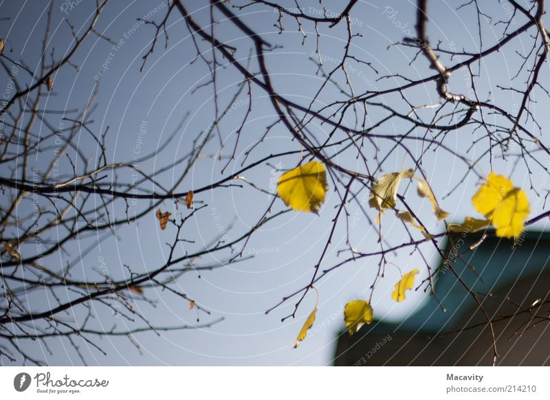 Brühl Autumn Tree Leaf To dry up Gloomy Brown Yellow Gold Moody Transience Change Colour photo Twilight Autumnal Autumnal weather Autumn leaves Branch Twig