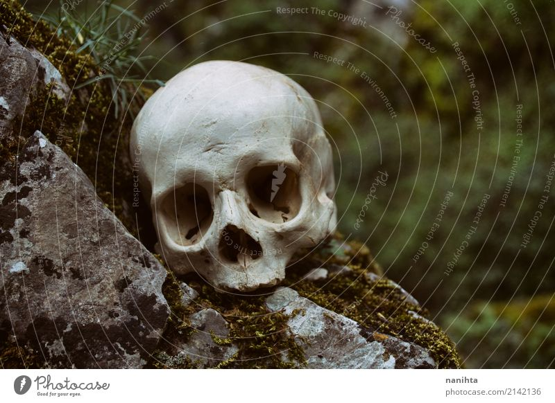 Human skull in nature Human being Nature Old Green White Environment Natural Death Gray Rock Fear Wild Authentic Culture Fear of death Creepy