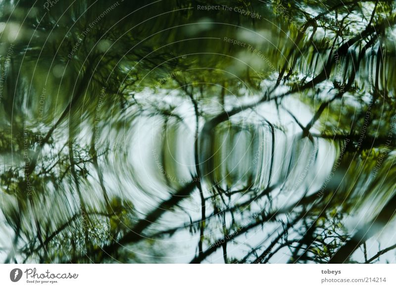 ..... Plant Tree Bushes Foliage plant Wild plant Waves River bank Colour photo Exterior shot Reflection Green White Bright Branch Twig Blur Exceptional Deserted
