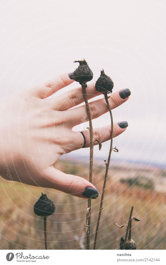 Hand touching dried plans in nature Human being Sky Nature Youth (Young adults) Plant Young woman Clouds 18 - 30 years Adults Life Environment Autumn
