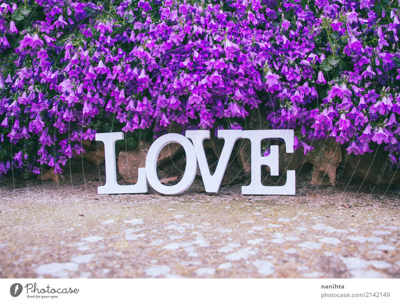 Word LOVE and a lot of purple flowers Feasts & Celebrations Valentine's Day Mother's Day Wedding Nature Spring Summer Flower Foliage plant Decoration Stone Sign