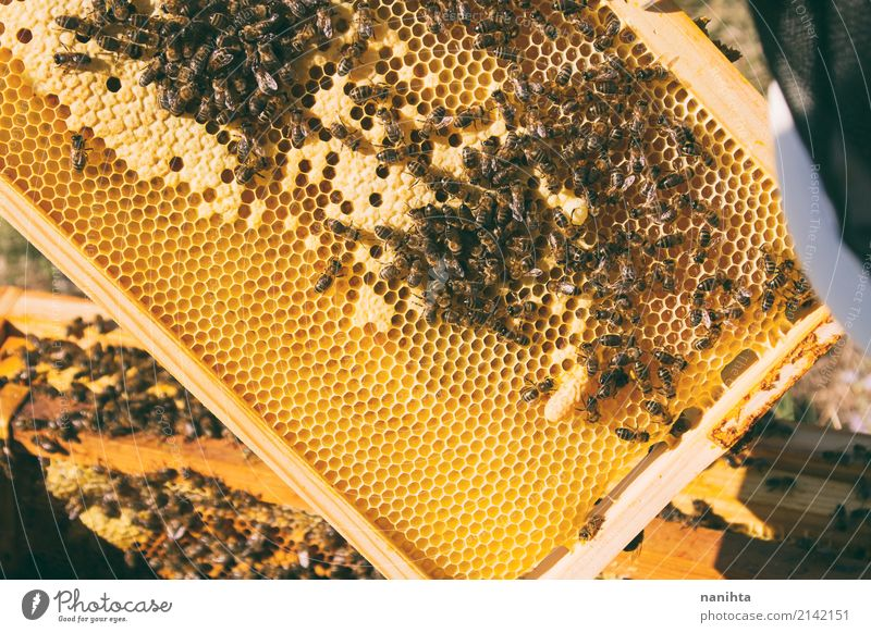 Hive with bees. Beekeeping. Food Honey Nutrition Organic produce Work and employment Profession Agriculture Forestry Animal Insect Bee-keeper Beehive