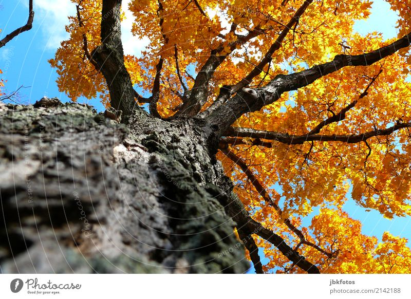 Sky Nature Old Plant Summer Tree Leaf Forest Environment Autumn Wood Orange Park Weather Air Beautiful weather