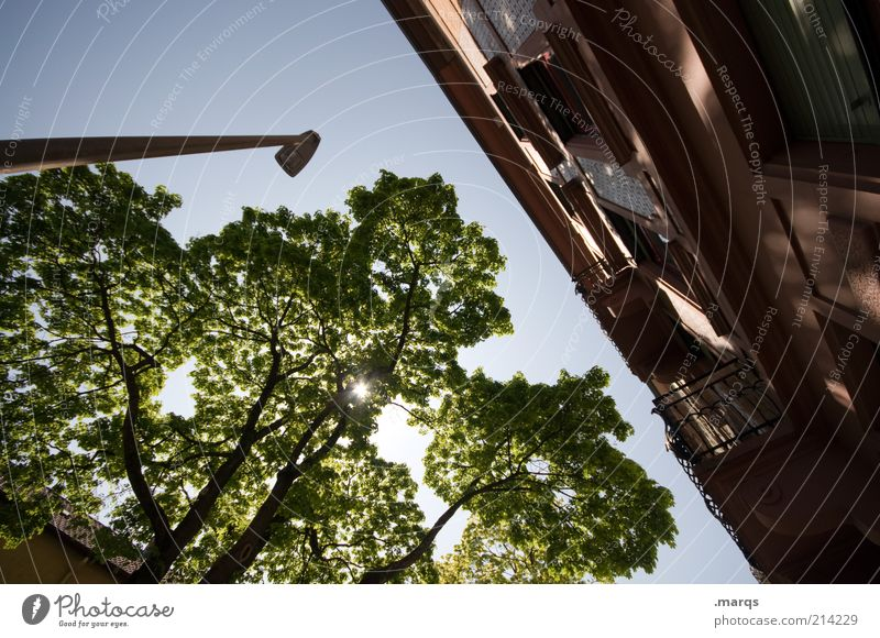 always the sun Lifestyle Living or residing Lantern Cloudless sky Beautiful weather Tree Town House (Residential Structure) Building Facade Illuminate Large