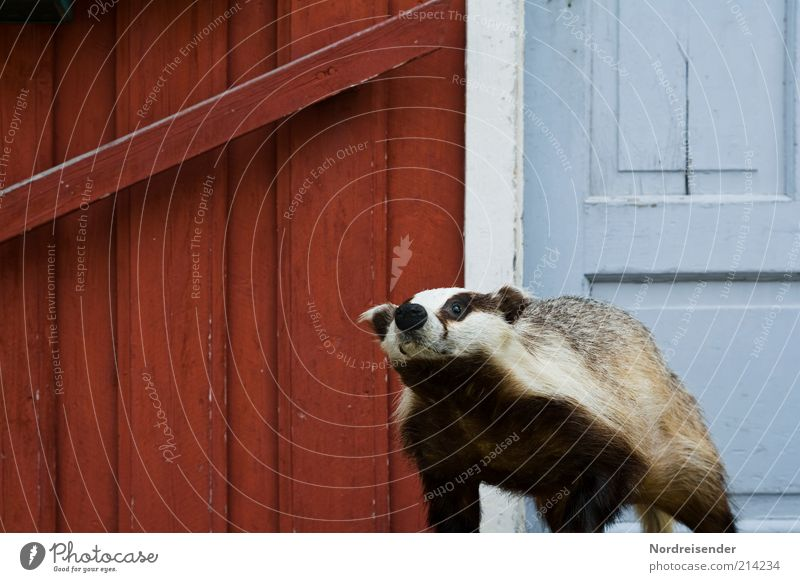 White Blue Red House (Residential Structure) Animal Wood Door Facade Threat Protection Observe Wild animal Hunting Entrance Symbols and metaphors Whimsical