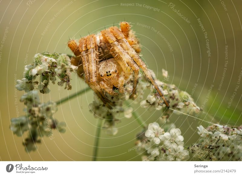 cross-spider yoga Environment Nature Landscape Plant Animal Spring Summer Autumn Grass Bushes Garden Park Meadow Forest Wild animal Spider Animal face 1