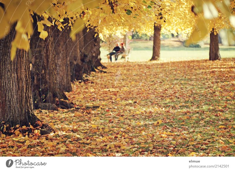 under lime Harmonious Relaxation Meditation Trip Sunlight Autumn Tree Lime tree trunk Leaf Autumn leaves Park Together Happy Bright Yellow Gold Warm-heartedness