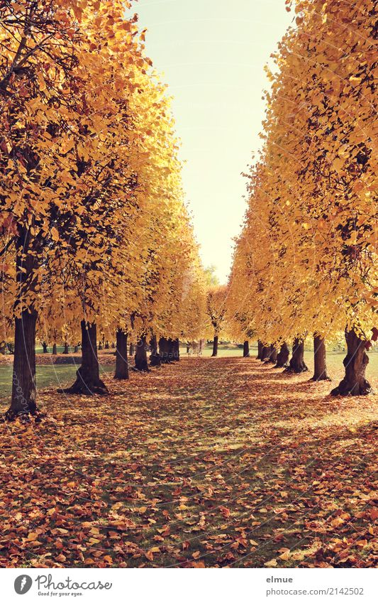 Tree Relaxation Loneliness Calm Yellow Autumn Senior citizen Contentment Park Illuminate Gold Blonde Beautiful weather Joie de vivre (Vitality) Warm-heartedness
