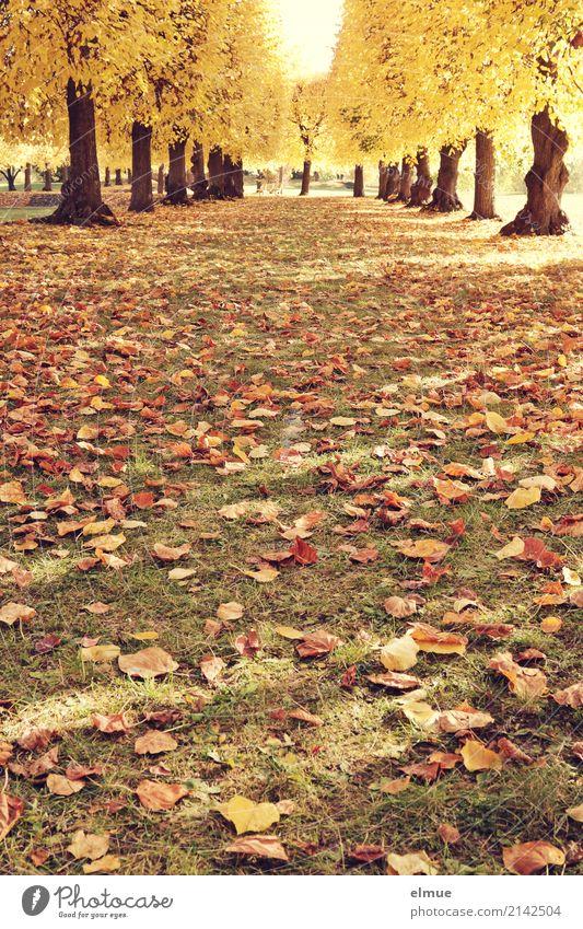 Nature Old Tree Loneliness Calm Yellow Autumn Senior citizen Contentment Dream Park Illuminate Gold Blonde Beautiful weather Joie de vivre (Vitality)