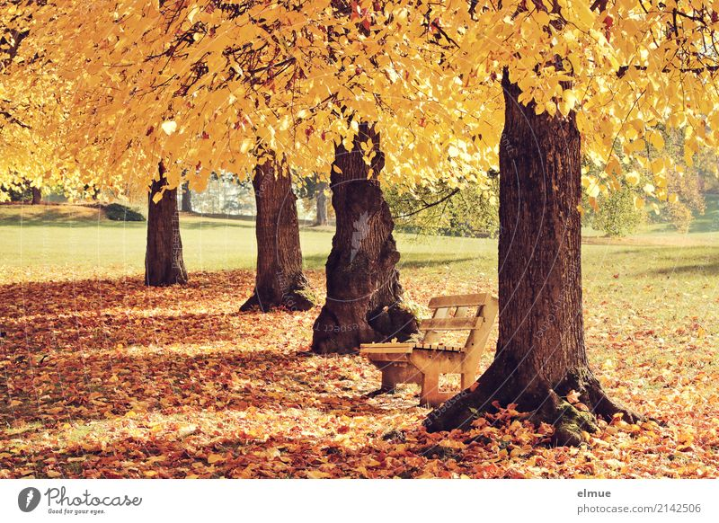 rest Nature Autumn Beautiful weather Tree Lime tree Tree trunk Autumn leaves Park Outskirts Illuminate Yellow Gold Happy Contentment Joie de vivre (Vitality)