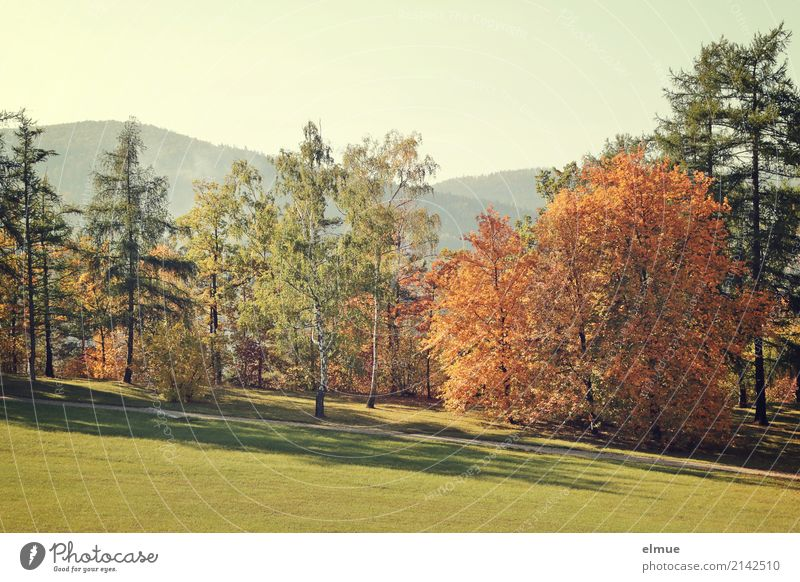 Colour Tree Landscape Relaxation Calm Environment Autumn Senior citizen Meadow Happy Bright Contentment Park Illuminate Esthetic Idyll