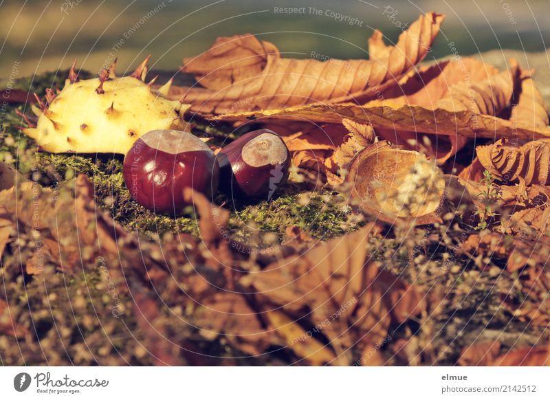Nature Leaf Joy Environment Autumn Small Happy Brown Design Leisure and hobbies Fruit Park Lie Infancy Creativity Idea