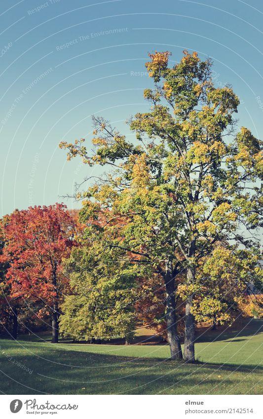 Nature Vacation & Travel Colour Tree Relaxation Calm Environment Autumn Senior citizen Happy Leisure and hobbies Contentment Dream Park Illuminate