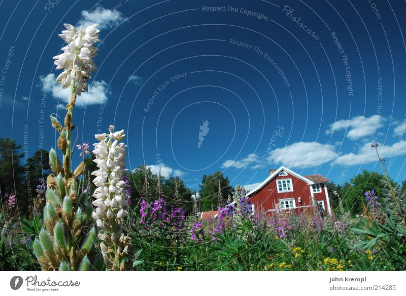 Sky Nature Plant Blue Green Beautiful Summer White Relaxation Flower Red Clouds House (Residential Structure) Environment Meadow Natural