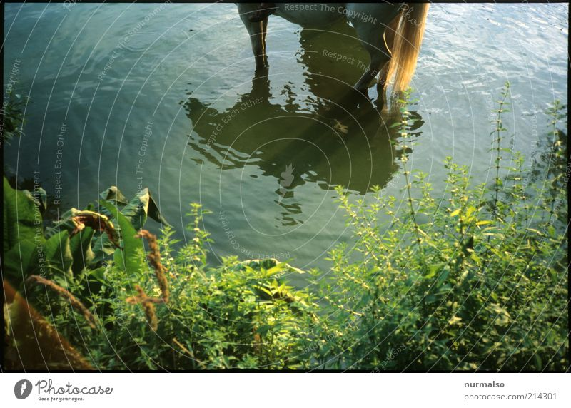 Nature Water Plant Summer Joy Animal Freedom Grass Leisure and hobbies Swimming & Bathing Natural Growth Bushes Horse Uniqueness Clean