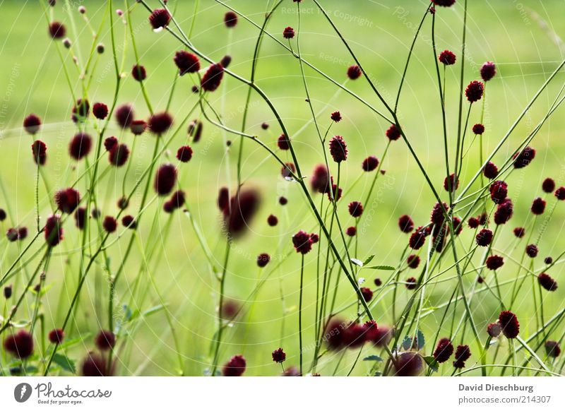 Nature Green Beautiful Summer Plant Environment Meadow Spring Grass Blossom Blossoming Stalk Blade of grass Blur Dark brown Grass blossom