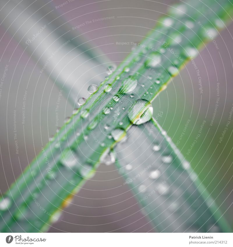 The X Environment Nature Plant Elements Water Drops of water Climate Weather Bad weather Rain Grass Foliage plant Wild plant Wet Natural Cross Subdued colour