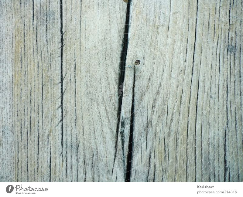 Nature Tree Wood Gray Background picture Environment Uniqueness Tree trunk Crack & Rip & Tear Copy Space left Texture of wood