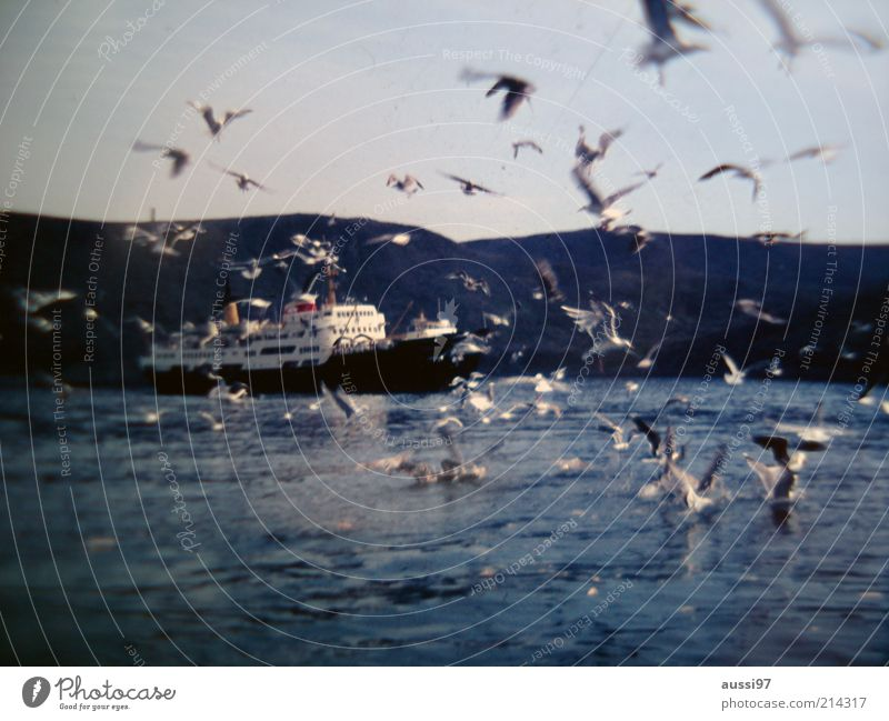 Nature Sky Ocean Lake Landscape Watercraft Bird Flying Wing Hill Navigation Tension Seagull Ferry Attack Flock
