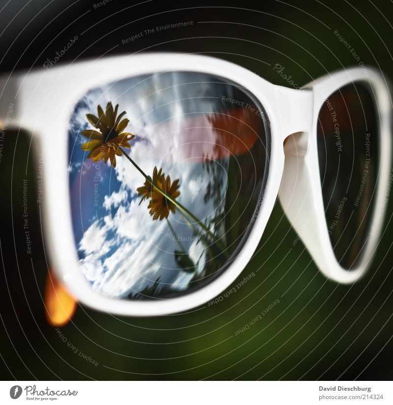 Summer comes and goes... Nature Plant Clouds Spring Flower Accessory Eyeglasses Sunglasses Blue Yellow Green Black White Reflection Mirror image Perspective