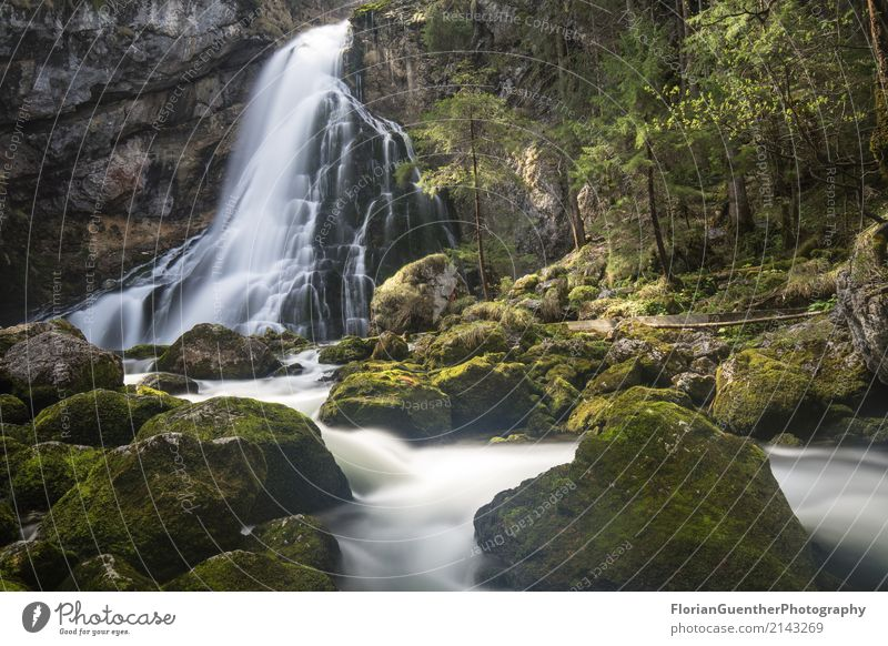 Gollinger Waterfall Environment Nature Landscape Earth Spring Summer Beautiful weather Plant Alps River bank Golling on the river Salzach Austria Europe