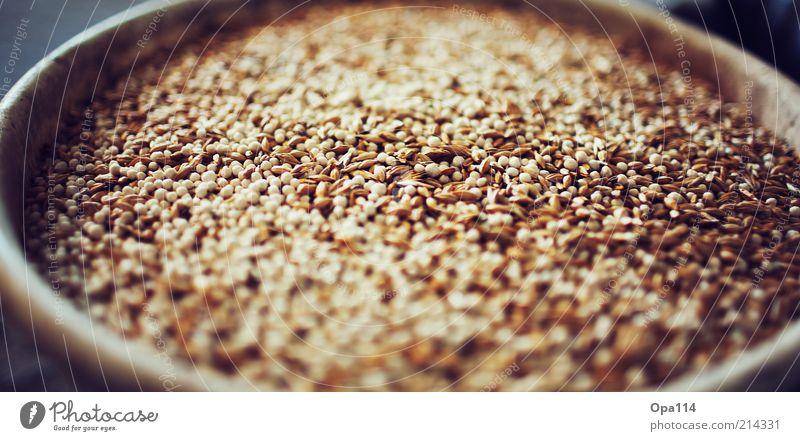 Yellow Gray Brown Gold Firm Grain Organic produce Feeding Barley
