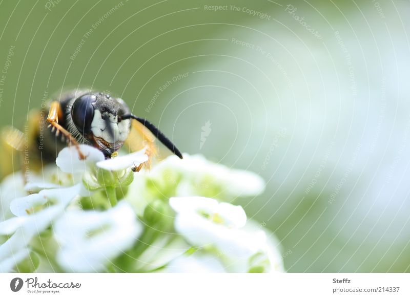 Flower meal - Wasp eating wasp To feed Wasps wasp head wild flower Animal face Animal portrait Near Blossom naturally Feeler Wild plant Pistil Meadow flower