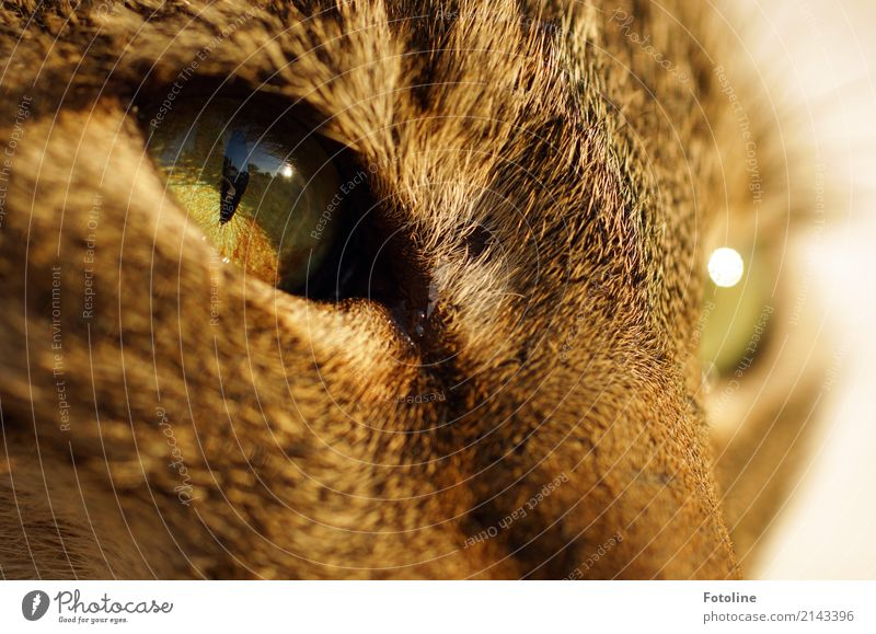 In the eye of the beholder Environment Nature Animal Pet Cat Animal face Pelt 1 Warmth Soft Brown Green Looking Cat eyes Observe Colour photo Multicoloured