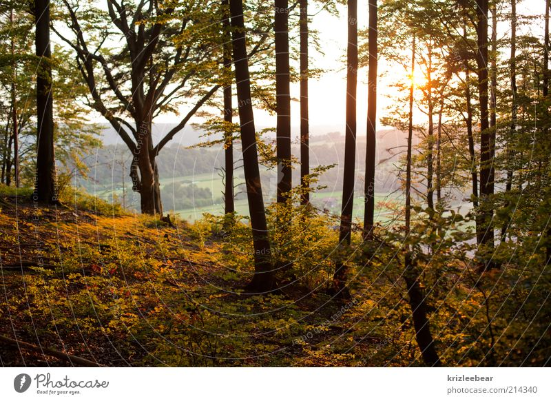 zauberwald Nature Autumn Beautiful weather Forest Old Joy Colour photo Exterior shot Evening Central perspective
