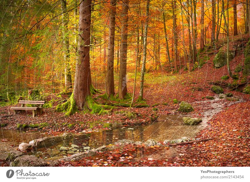 Forest in autumn colors Design Joy Happy Relaxation Leisure and hobbies Sun Nature Landscape Autumn Warmth Tree Leaf Bright Natural Gold Colour Fussen Germany