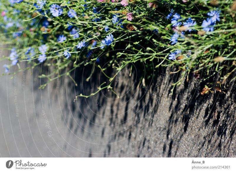 Nature Flower Green Blue Plant Life Gray Lanes & trails Concrete Growth Simple Blossoming Light Herbs and spices Medicinal plant Wild plant