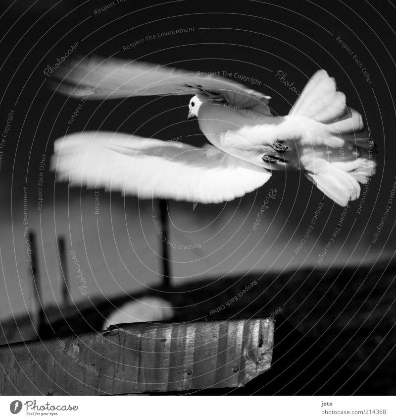 Nature Sky White Black Animal Life Dark Freedom Air Bird Elegant Environment Flying Esthetic Peace Wing