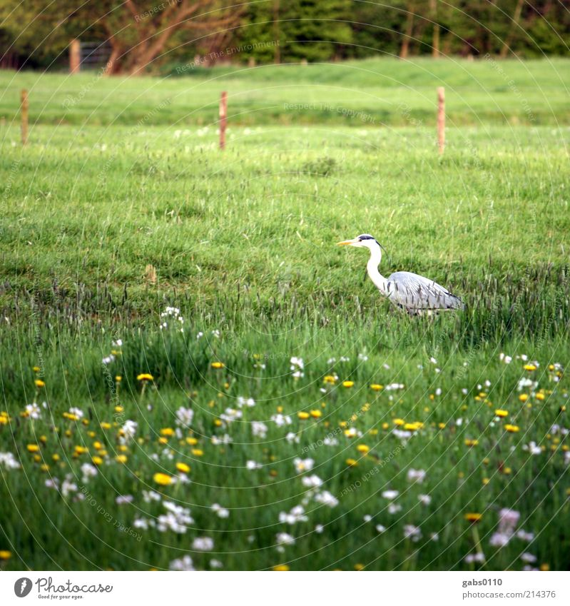bird Environment Plant Animal Grass Blossom Meadow Hunting Bird Flower meadow Fence Green Life Climate Climate protection Wild Agriculture Yellow White Freedom