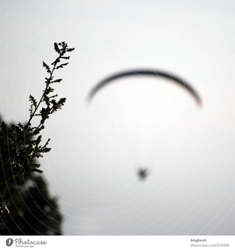 flying away Paragliding 1 Human being Sky Bushes Flying Free Gray Longing Freedom Uniqueness Trust Colour photo Subdued colour Exterior shot Evening Grass