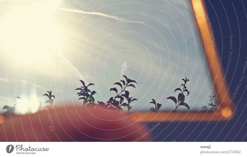 Sky Sun Blue Plant Leaf Autumn Warmth Gold Bushes Mirror Seasons Beautiful weather Environment
