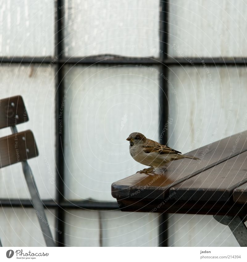 Waiting for Mr. K. Chair Wall (barrier) Wall (building) Animal Wild animal Bird 1 Sit Brash Table Sparrow Beer garden Guest Gastronomy Looking Glass Glass wall