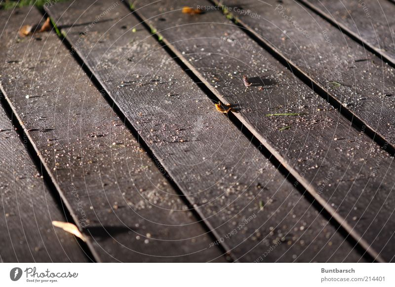 pile dust Floorboards Wooden floor Dirty Dust Sand Dusty Seam Ground Subdued colour Exterior shot Evening Night Artificial light Light Contrast Deserted Shadow