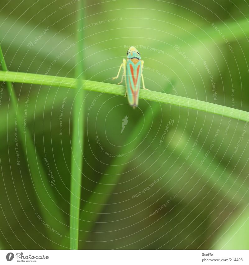 Nature Green Summer Animal Environment Grass Small Legs Living thing Insect Ease Blade of grass Easy Flexible Fast moving Diminutive