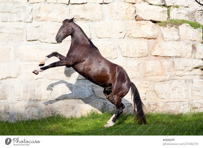 Animal Black Wall (building) Wall (barrier) Playing Freedom Jump Glittering Dangerous Large Tall Horse Pet Ascending Poster Behavior