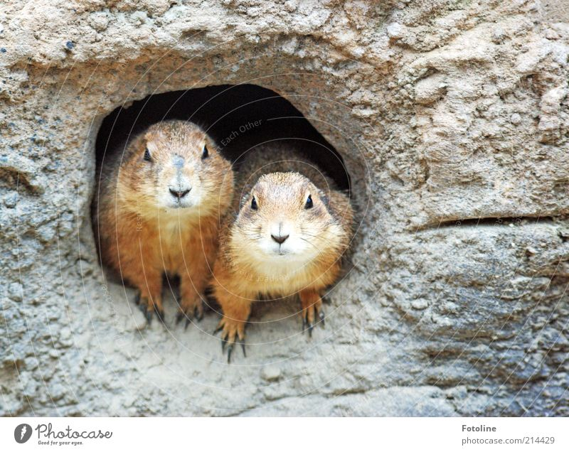 Animal Together Pair of animals Environment Earth Sit Animal face Desert Pelt Wild animal Hollow Elements Paw Earth hole Drought Cave